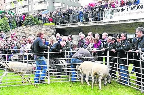 L'ovella de raça xisqueta, motor de la fira